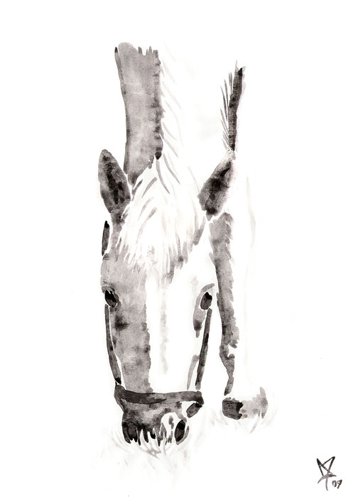 Lipizzan horse watercolor painting